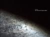 Video Art of Sylvia Safdie, The